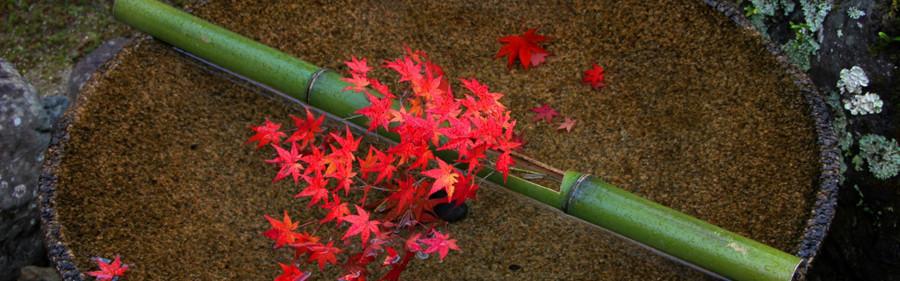 fall image1