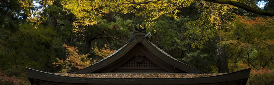 fall shrine